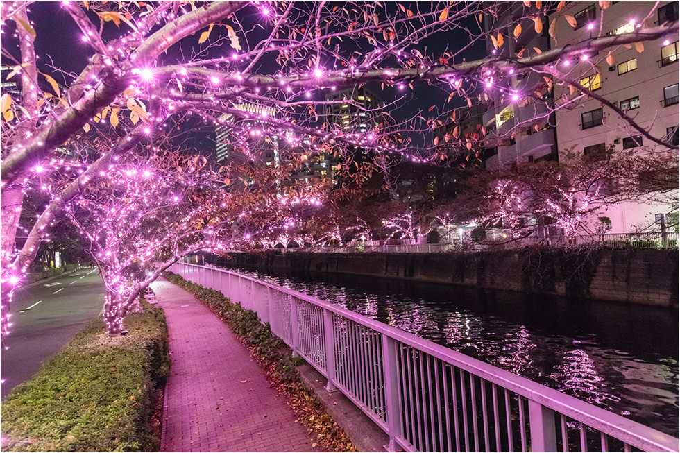2019東京夜櫻綻開!目黑川冬季聖誕燈飾:2.2公里絕美粉紅「冬之櫻」