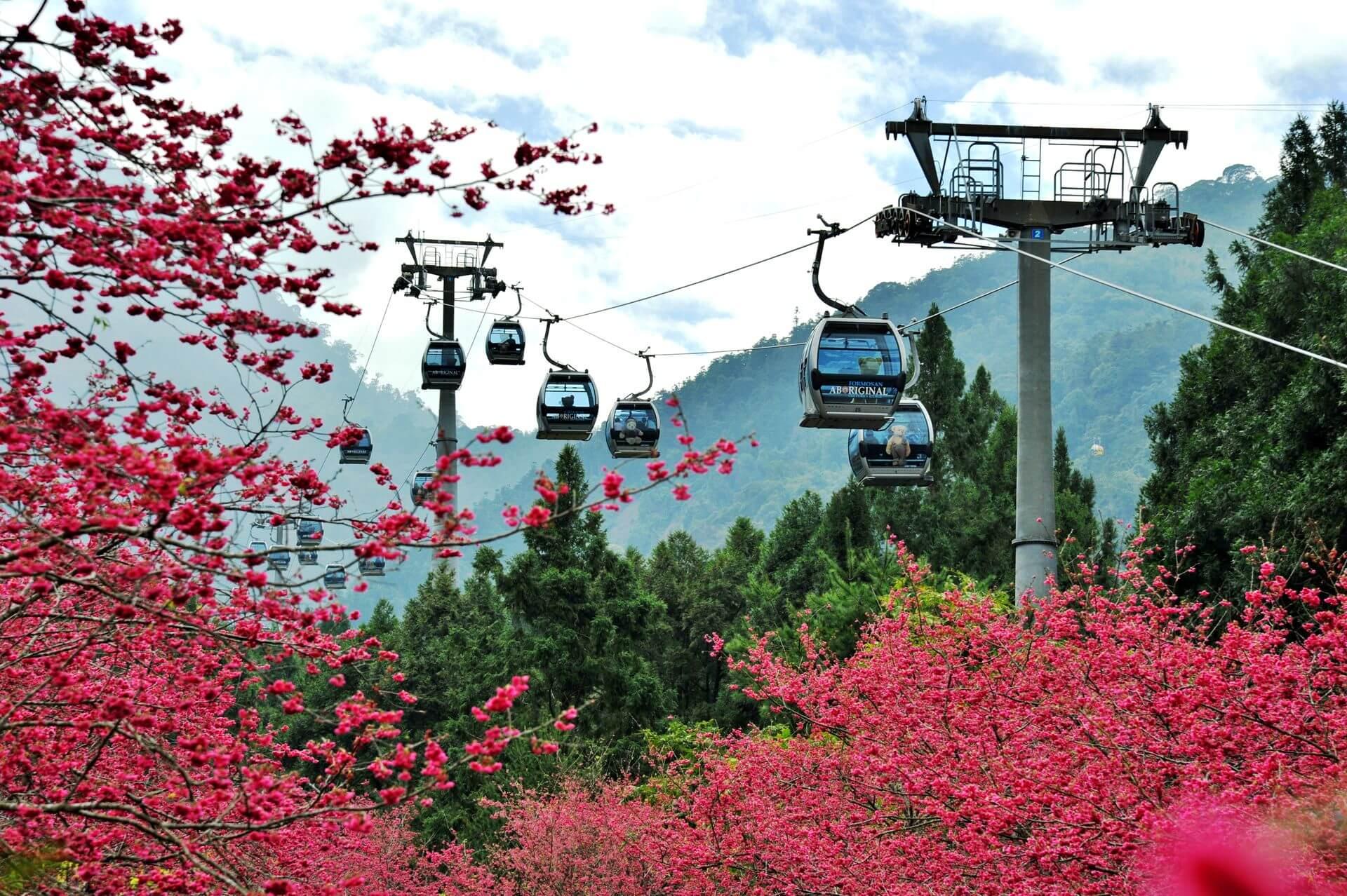 【2020九族櫻花祭】早鳥票熱賣中!1/30 就到日月潭賞櫻、遊湖、坐纜車