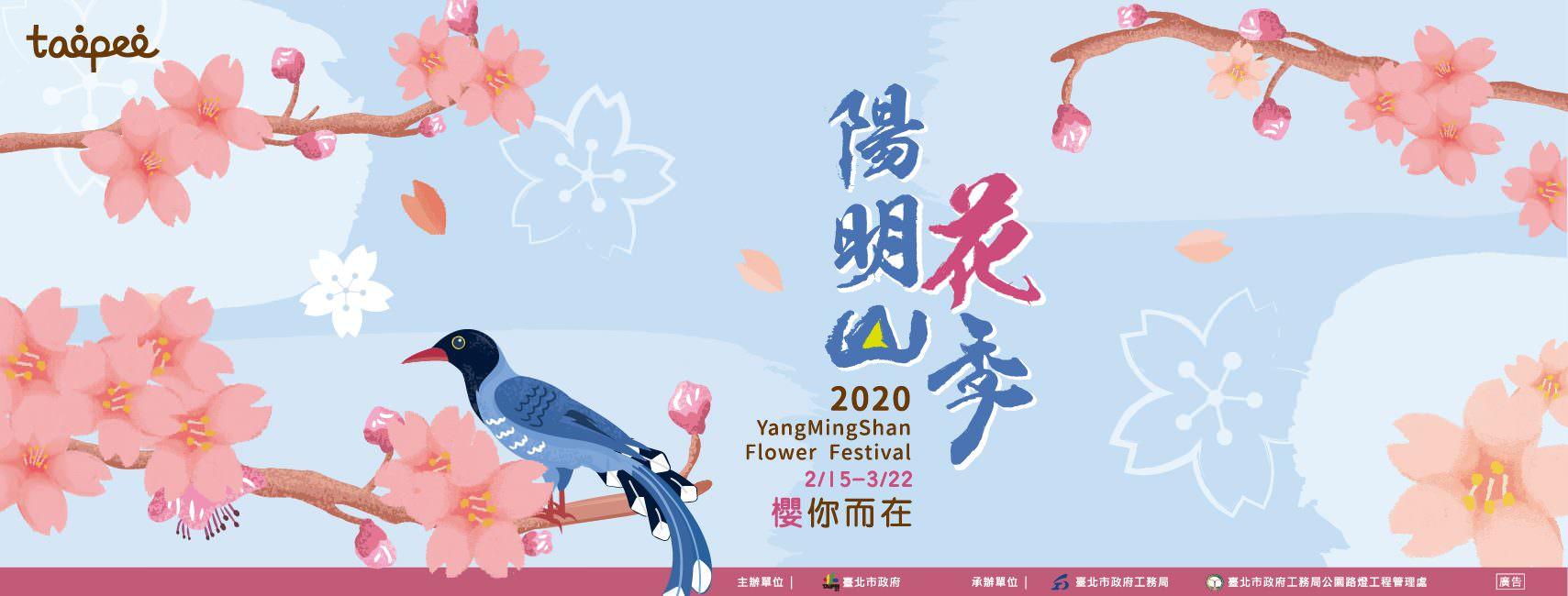 【2020陽明山花季】2/15~3/22櫻你而在!賞花路線、交管、住宿懶人包!