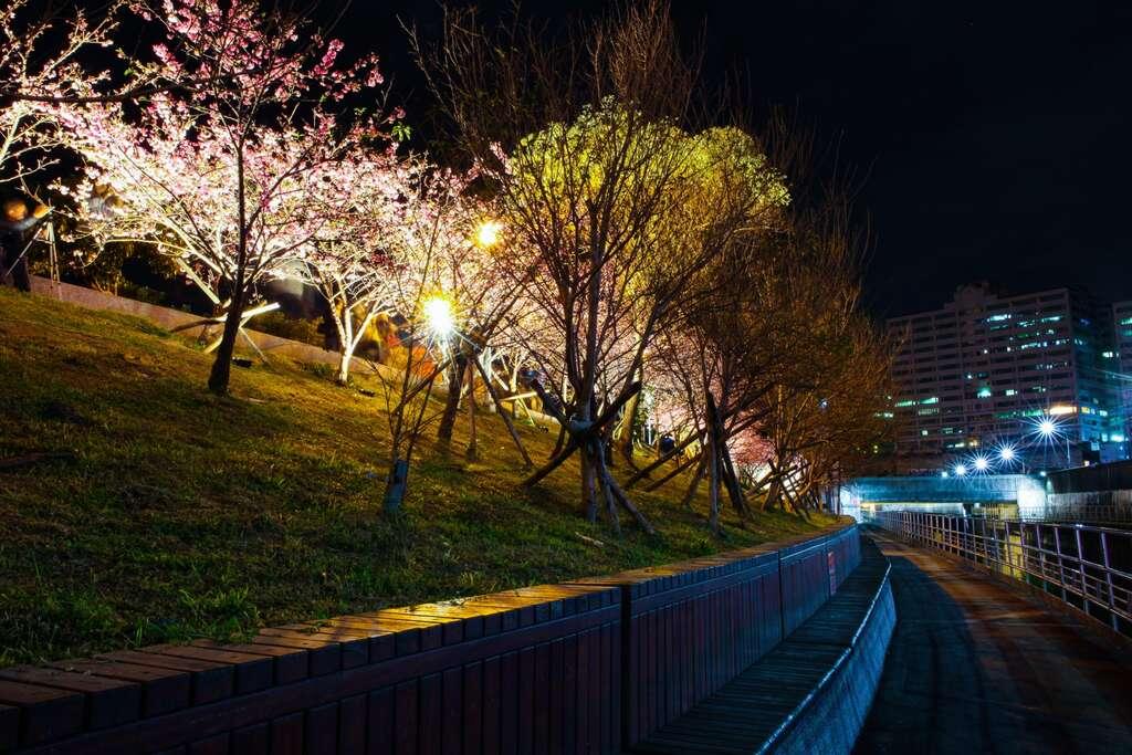 【2021內湖樂活夜櫻季】1/30~2/28 期間限定,不用到日本也能賞夜櫻! - threeonelee.com