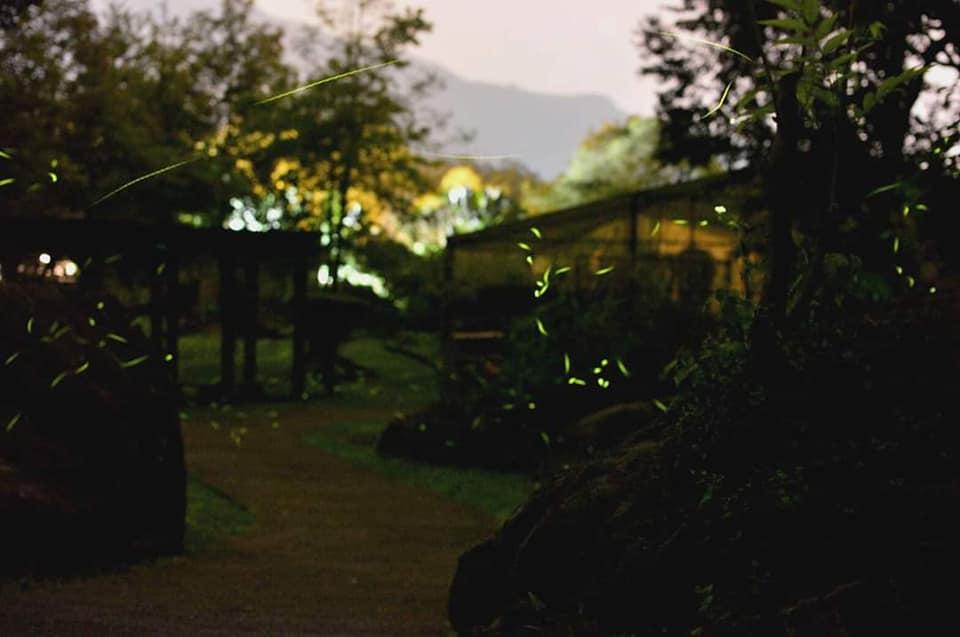 富源國家森林遊樂區 蝴蝶谷溫泉度假村