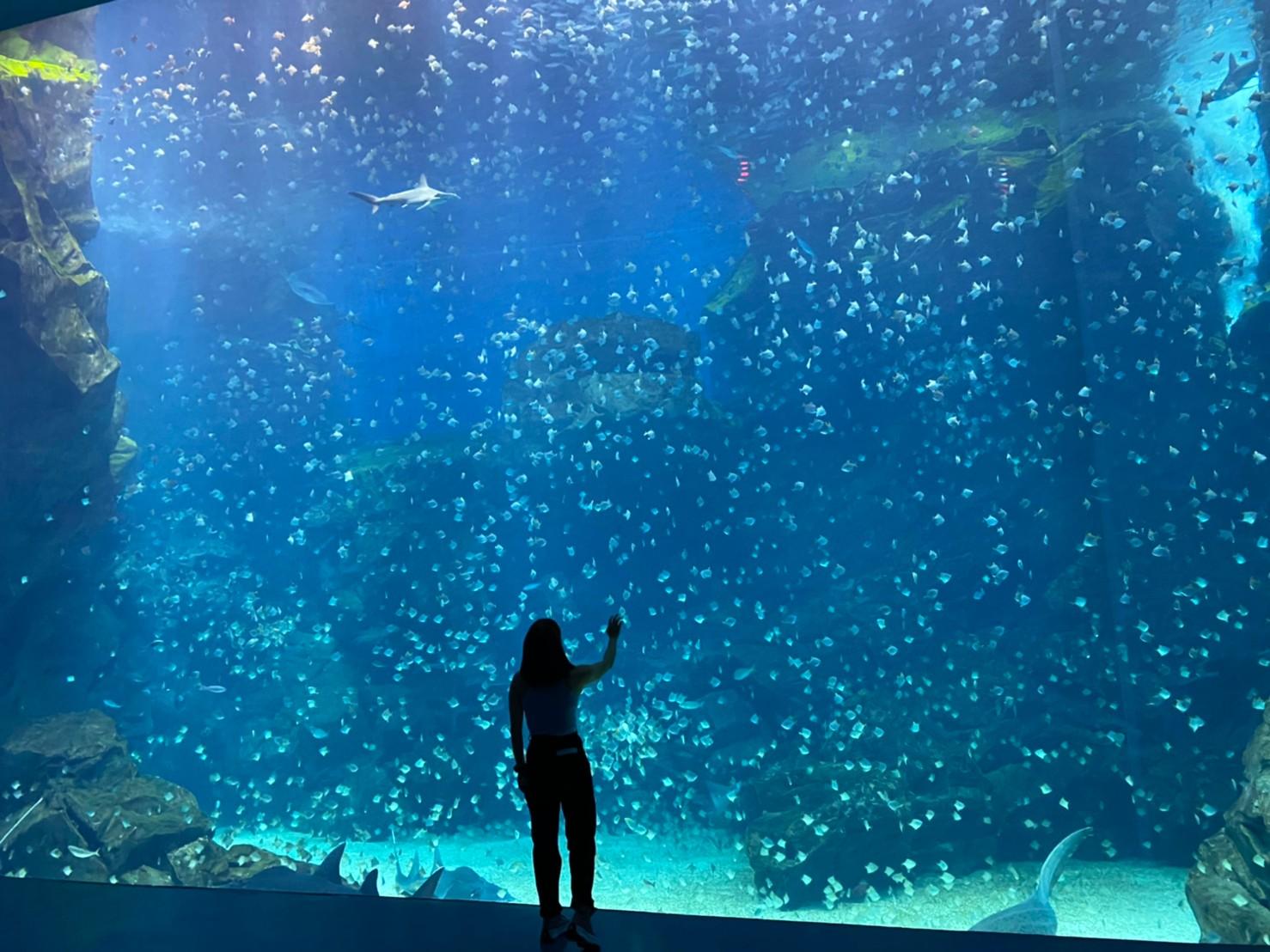 【桃園水族館 Xpark 懶人包】展區、票價&購票、營業時間、和逸飯店介紹