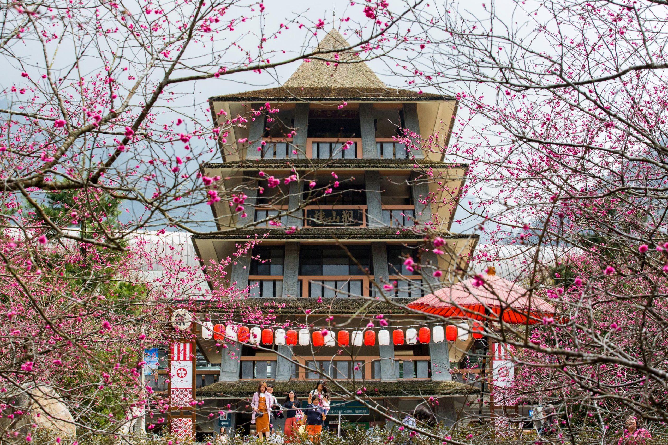 九族文化村 櫻花