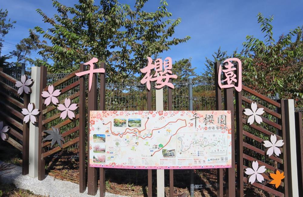 福壽山農場 千櫻園 賞櫻